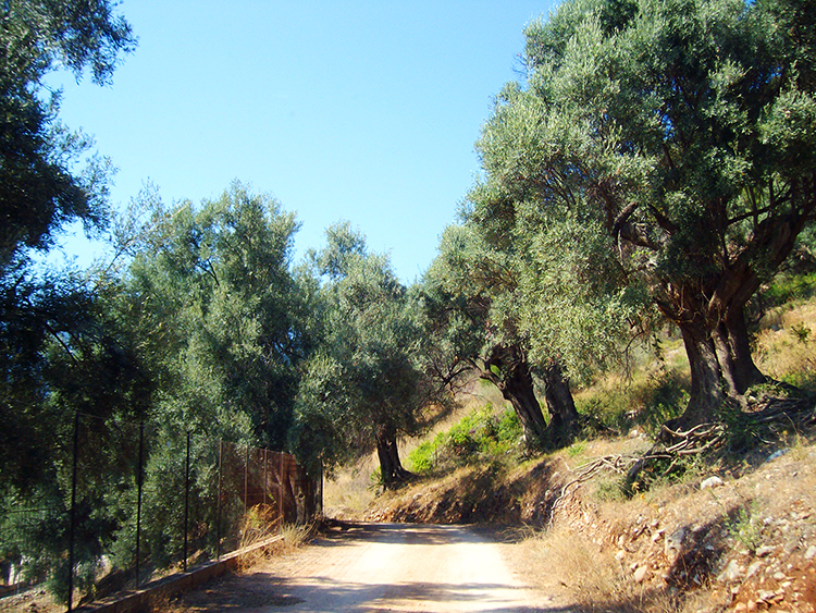 Drumul catre Plaja Agiofili, Lefkada, Vacanta si Calatorii, Viata ca o vacanta