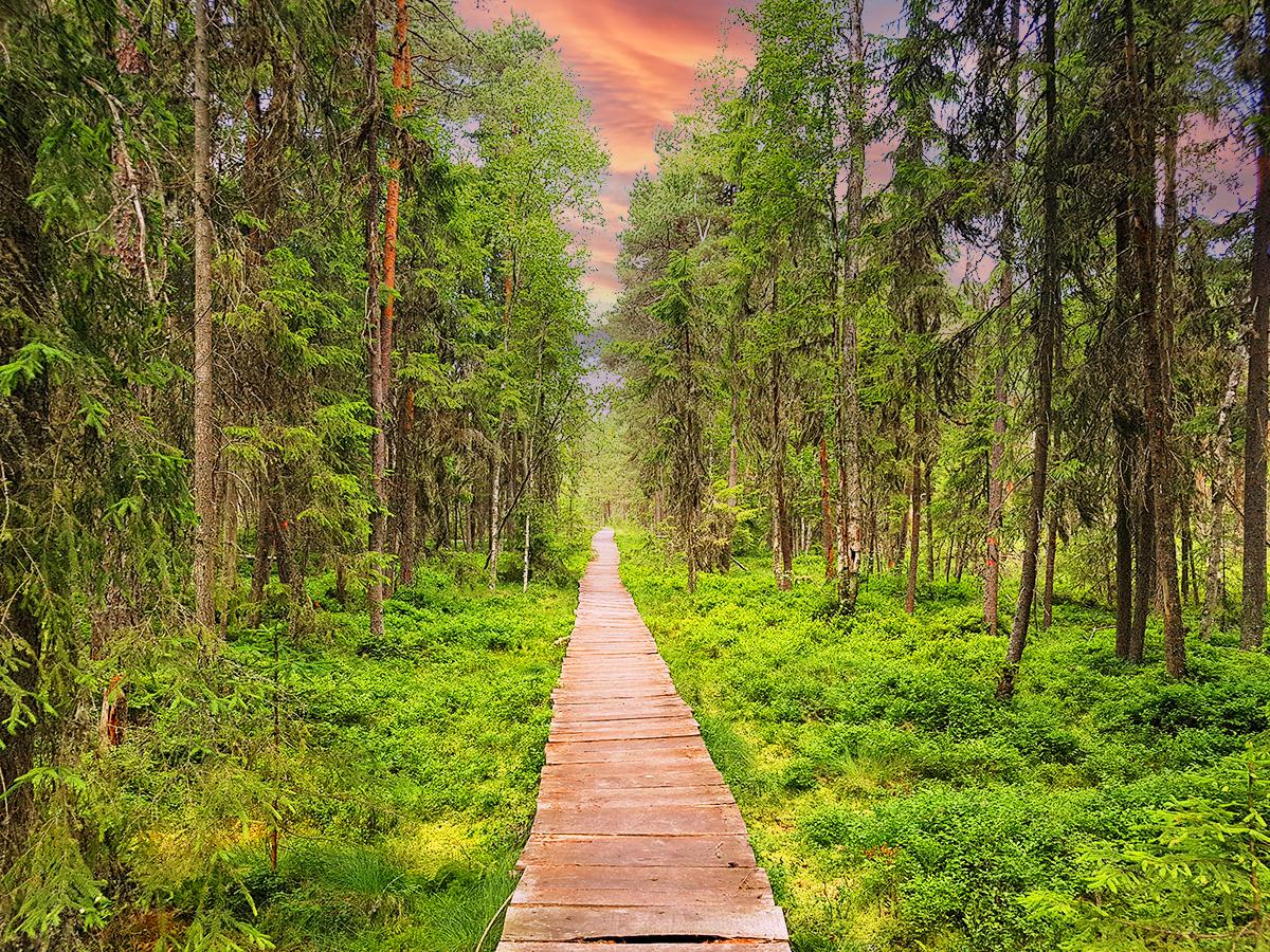 Poiana Stampei Peat Bog (Mysterious Travel Destinations), Romania
